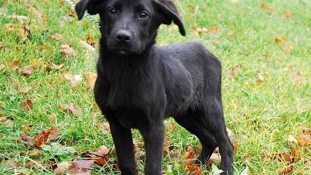 Borek je 6 měsíců starý kříženec labradora, veselý a hravý pejsek, vhodný do teplého domova. Rád si hraje a mazlí se, má rád děti a procházky.