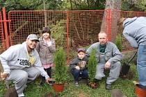 Sázení stromků v Libčevsi