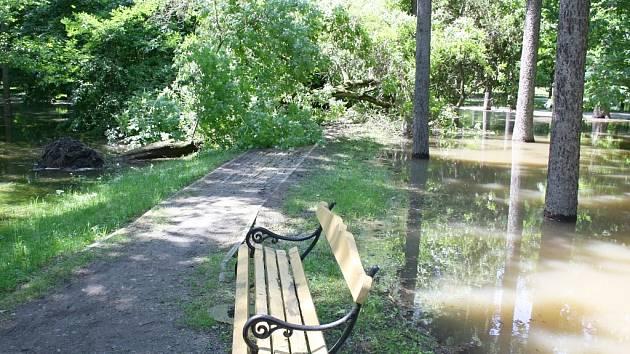 Středa 5. 6. 2013. Část Masarykových sadů je pod vodou. Strom se kvůli podmáčení vyvrátil na cestu