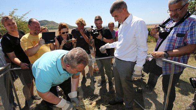 Premiér a ministr vypouštěli sysly na vrchu Milá