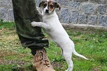 Čuk je nejspíše kříženec, asi 4 měsíce starý pes, v kohoutku 15 cm. Je to rozverné a malé štěně a jak si ho vychováte, takový bude.