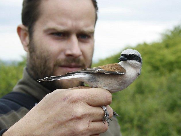 Při Slavnostech stepí ukazují například ornitologové, jaké ptačí druhy v lokalitě žijí