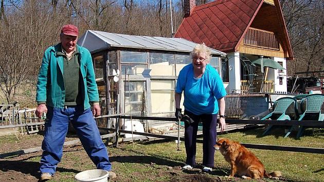 Adolf a Marie Vogelovi s pejskem Ferdou čistí záhon s jahodami na své zahrádce v zahradní kolonii na kraji Postoloprt.