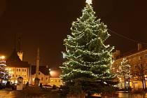 Vánoční strom roku 2014 na Mírovém náměstí v Lounech. Také letos bude strom z Loun, poprvé se rozsvítí v neděli 29. listopadu.