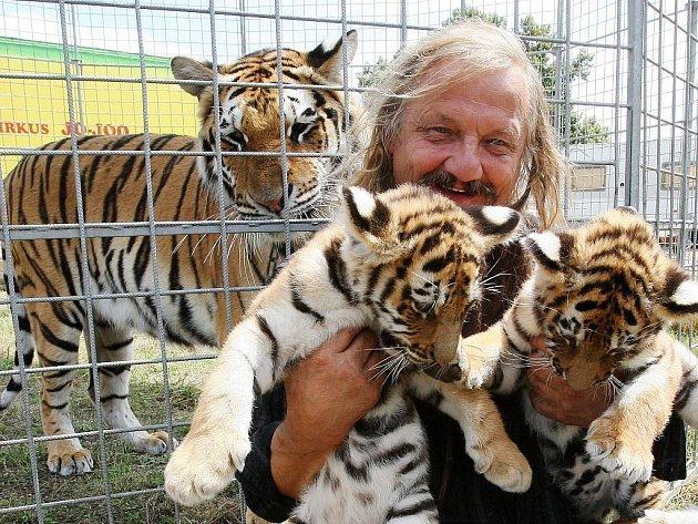 Jaromír Joo si hraje s koťaty tygra sibiřského při současném hostování svého cirkusu v Litoměřicích