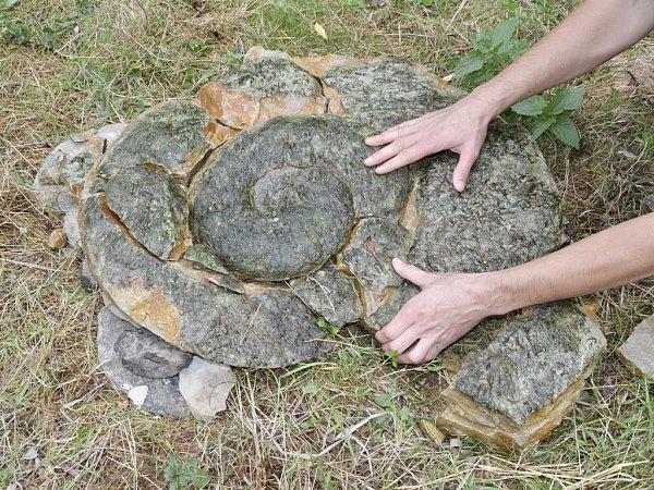 Devadesát milionů let stará zkamenělina ležela na dně Ohře