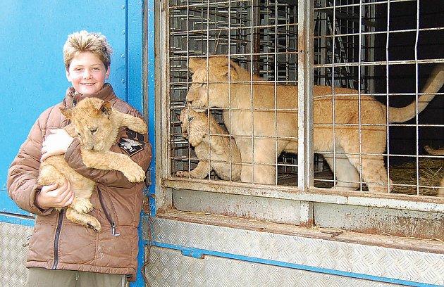 CIRKUS. Alex Polach ukazuje lvíče, s nimiž přijel do Loun cirkusový soubor.
