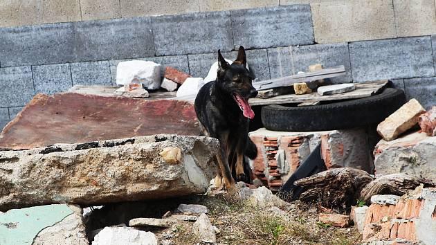 Policejní psi i speciálně vycvičení psi záchranáři budou k vidění v neděli v Ivančicích.