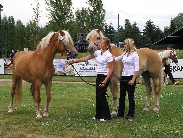 Zuzana Kňavová a Lucie Czervoniaková ukazují klisny Lendy a Fairy z Jezdecké společnosti v Bitozevsi.