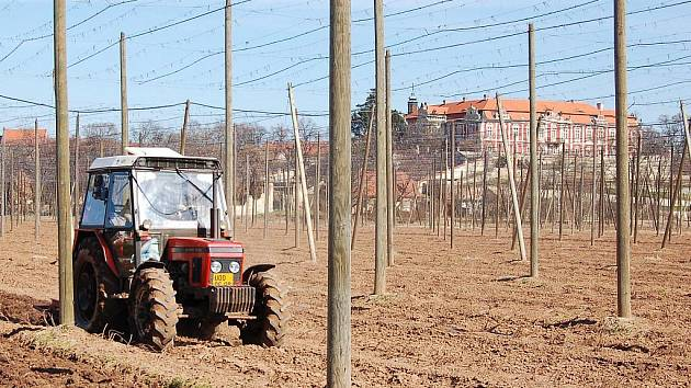 Josef Svoboda z družstva Chmelařství Žatec pomocí traktoru kypří půdu ve chmelnicích pod zámkem ve Stekníku.