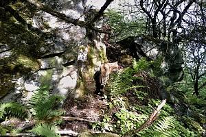 Fotopast umístěná v Doupovských horách zachytila kočku divokou.