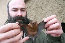 Bořek Franěk, ochranář z Českého středohoří, kontroluje zdravotní stav netopýra při nedávném sčítání těchto zvířat v regionu na pomezí Lounska a Litoměřicka.