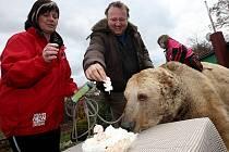 Medvědi z Veletic slavili narozeniny