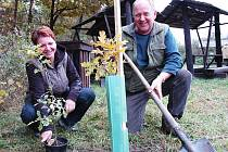 Přemysl Hautke s žateckou starostkou Zdeňkou Hamousovou dokončují sázení jednoho ze stromků, které dobrovolníci vysadili na naučné stezce v okolí Holedeče.