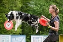 Alena Smolíková z Podbořan se profesionálně věnuje cvičení se psy.