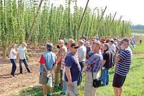 Pěstitelé chmele se sešli ve středu na tradičním setkání před sklizní ve Stekníku u Žatce.