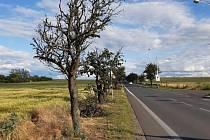 Hruškovou alej doplní 71 nových stromů.