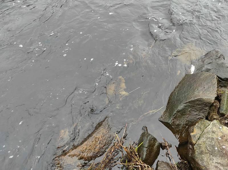 Do Ohře v Žatci vytékaly splašky z kanalizace. Foto Alois Jurkovič
