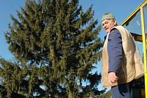 Stanislav Klepáč nakládá vánoční smrk  pro město u domku manželů Novotných v Žatci.