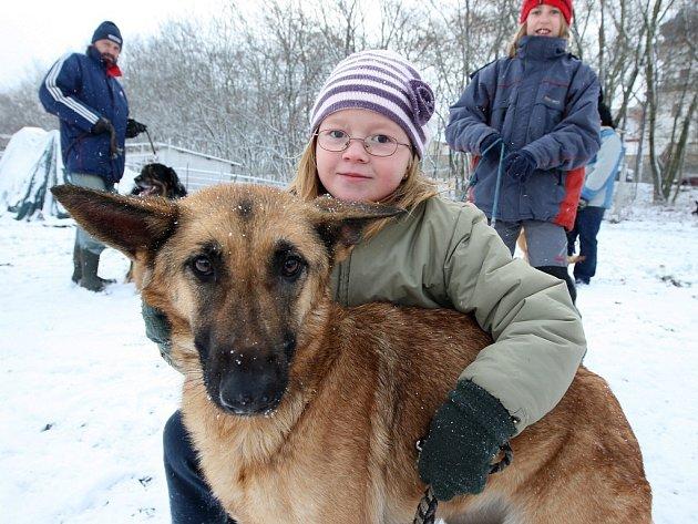 Hromadné venčení psů dobrovolníky v útulku pro opuštěná zvířata v Jimlíně na Lounsku.
