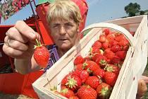 Prodej jahod na hlavním tahu u Bítozevsi