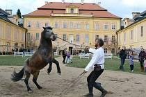 Václav Staněk s koněm Princem při zahájení návštěvní sezony na nádvoří zámku v Krásném Dvoře.