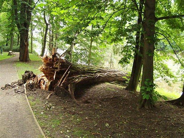 Padlý strom v lounském parku T. G. Masaryka