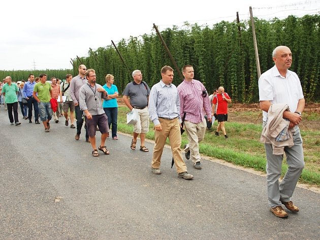 Pěstitelé si prohlížejí chmelnice u Stekníku na Žatecku