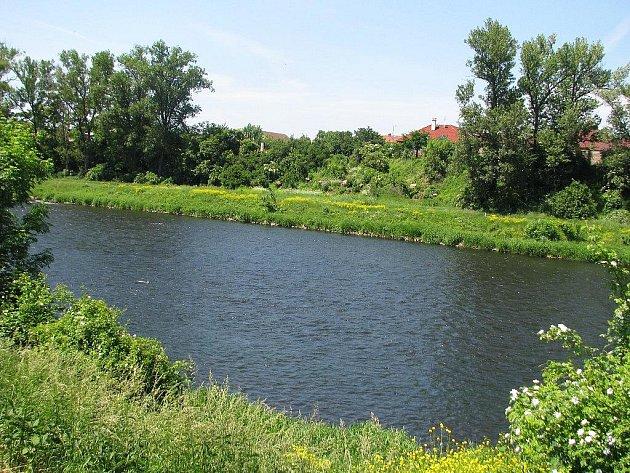 Vlevo řada topolů, vpravo řada topolů, uprostřed jen pařezy a nepřirozená díra. Zásah do zeleně u řeky vypadá zvláštně.