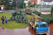 Vánoční strom, který spadl na náměstí v Kryrech v roce 2011. Smrk se zřítil v noci, hned ráno po rozednění přijel autojeřáb a znovu ho vztyčil a upevnil do správné polohy.