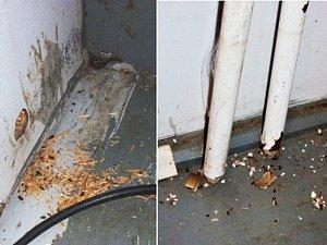 Hygienici zavřeli občerstvení v Žerotíně kvůli hlodavcům