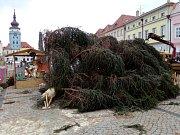Vánoční strom na žateckém náměstí Svobody se zlomil. Pravděpodobně kvůli silnému větru
