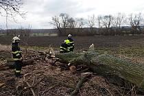 Dobrovolní hasiči pokáceli uschlé vrby v Cítolibech.