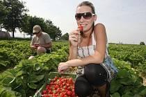Sladké jahody v rámci samosběru trhala také Leona Romanová z Libědic.