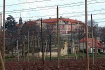 Zámek ve Stekníku obklopují chmelnice.