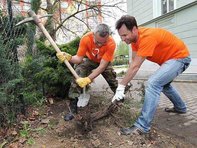 Leon Bureš a Martin Borovský z Elektrárny Počerady vykopávají pařezy v zahradě Radky v Kadani.