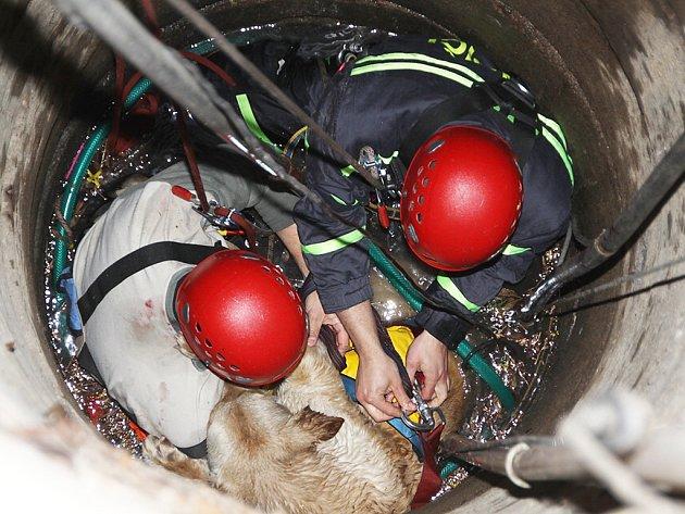 Hasiči se slanili do studny, aby mohli psa upevnit do postroje