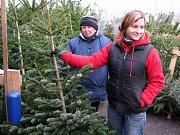 V Žatci začal prodej vánočních stromků. Kupující dají letos za smrčky a borovice od tří do pěti set korun.