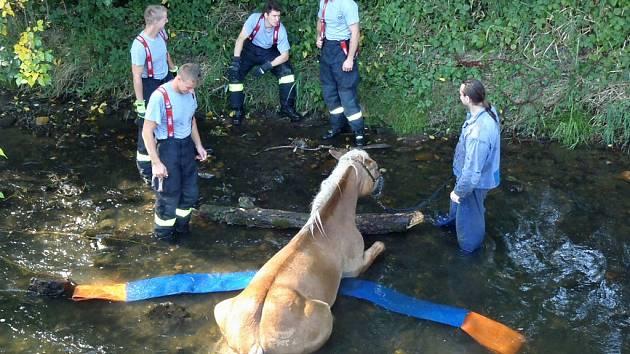 Hasiči pomohli kobyle z koryta říčky