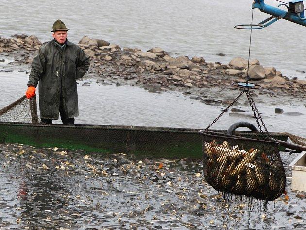 Výlov rybníka v Lenešicích