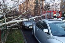 Vzrostlá bříza padla z areálu MŠ U Jezu v Žatci přímo mezi zaparkované automobily