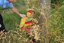 Strážníci našli v Lounech omámenou a zraněnou mladou dívku.