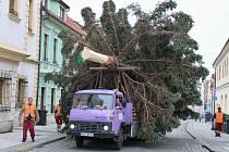 Stavění vánočního stromu na Mírovém náměstí v Lounech