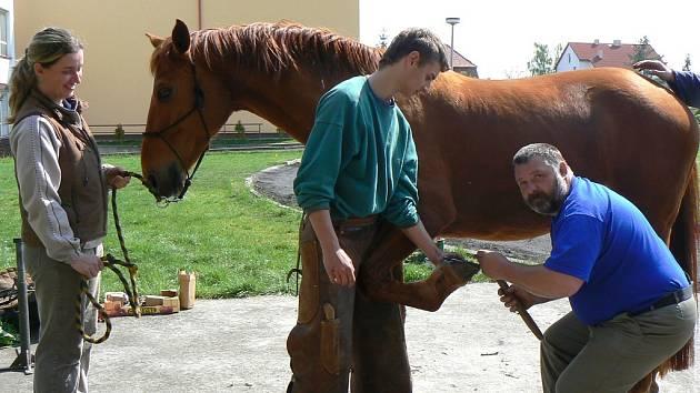 Soukromý podkovář a mistr odborného výcviku Karel Kysilka (vpravo) předvádí, jak správně okovat koně. Pomáhá mu jeho asistent Zdeněk Nuslauer a přihlíží majitelka koně Alena Krátká.
