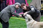 Krajská výstava psů na výstavišti v Lounech