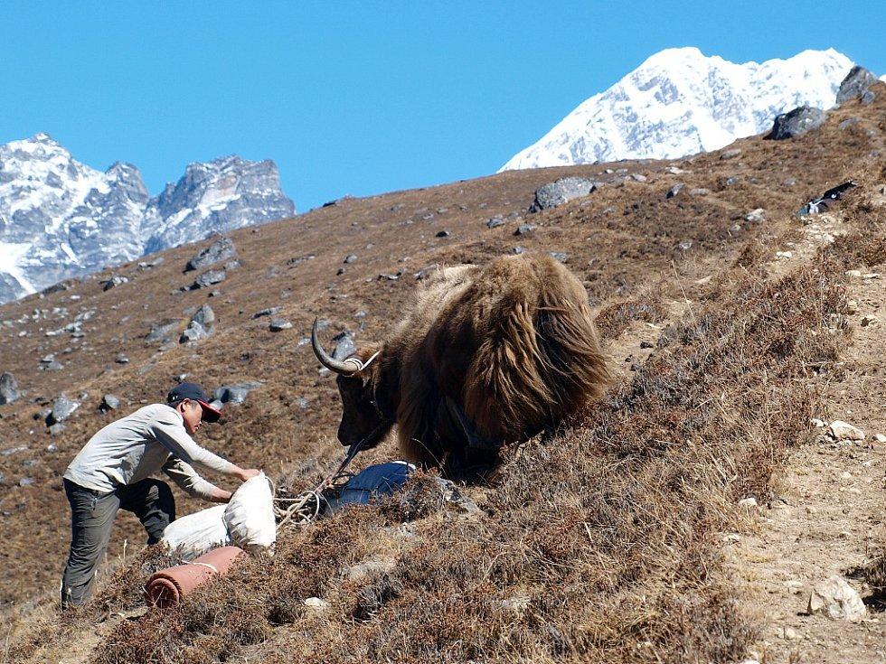 Jaci po cestě do základního tábora hory Ama Dablam (6812 m)