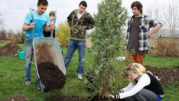 Školáci sázejí stromky u ZŠ kpt. O. Jaroše v Lounech
