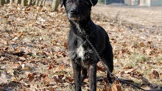 Bubáčková je nejspíše kříženec, asi 4 až 5 let stará fena, v kohoutku 45 cm, dobrý zdravotní stav. Bubáčková je takové klubíčko neštěstí. V útulku je trošku vystrašená z ostatních psů.