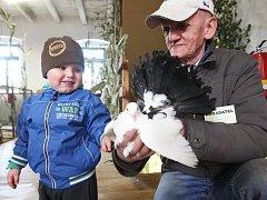 Malý návštěvník Denis Novák obdivuje holuba, kterého drží chovatel Luboš Kulhánek.