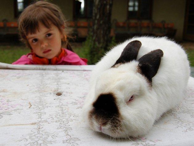 Andrea Kaplanová si prohlíží králíka na výstavě ve Smolnici.
